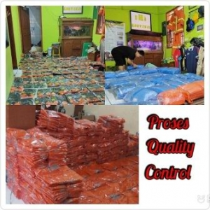 Proses Packing Dan Quality Control